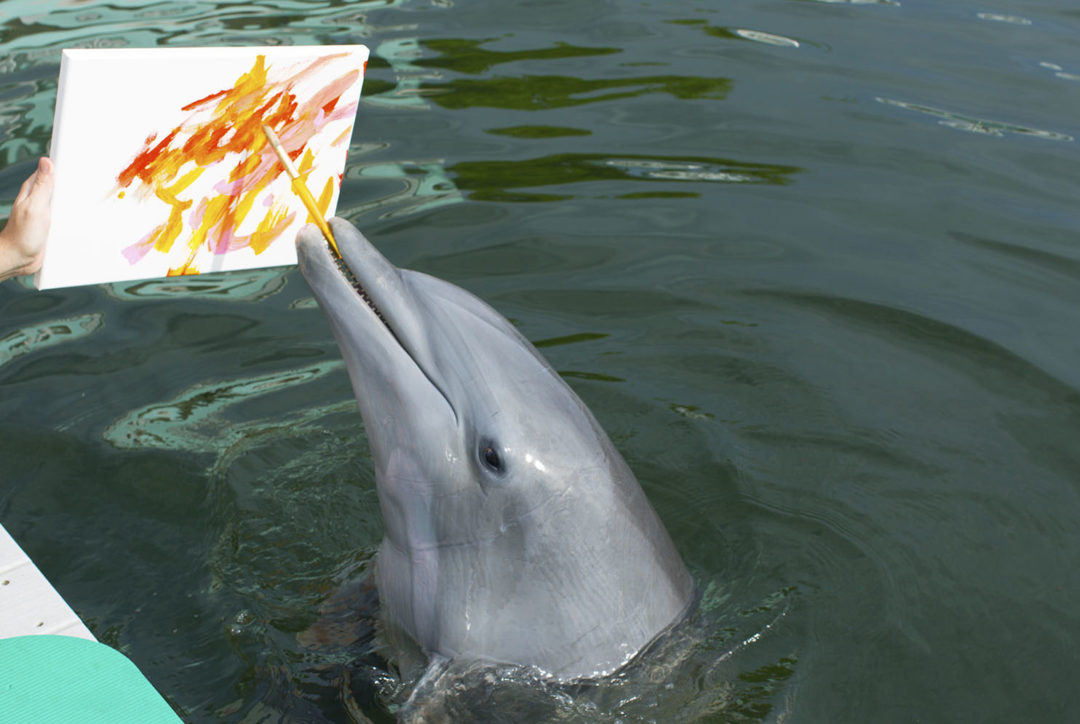 Dolphins Plus_Bebe Painting